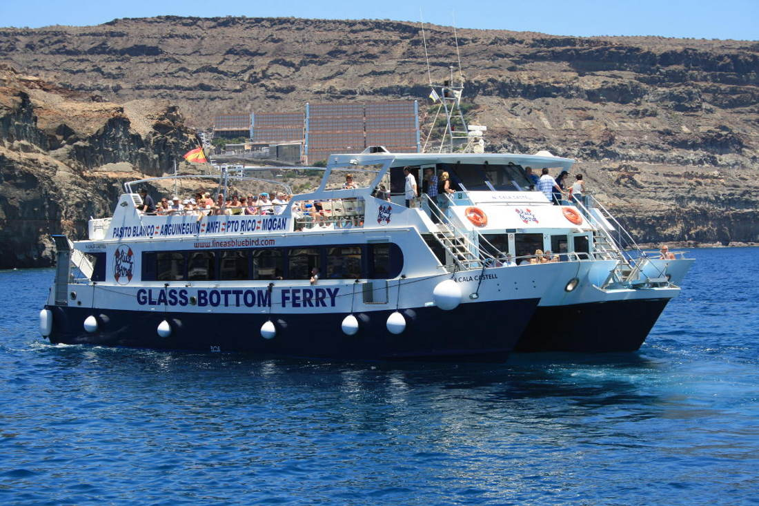 Glass Bottom Boat Tours In Gran Canaria Dolphins Guaranteed And Whales Search