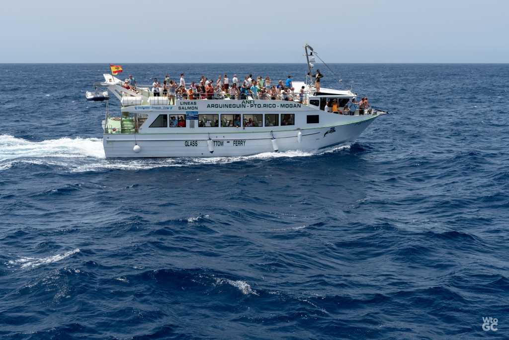 Dolphin Search Boat Trip